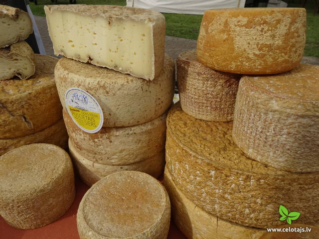 Cheeses in Latvia
